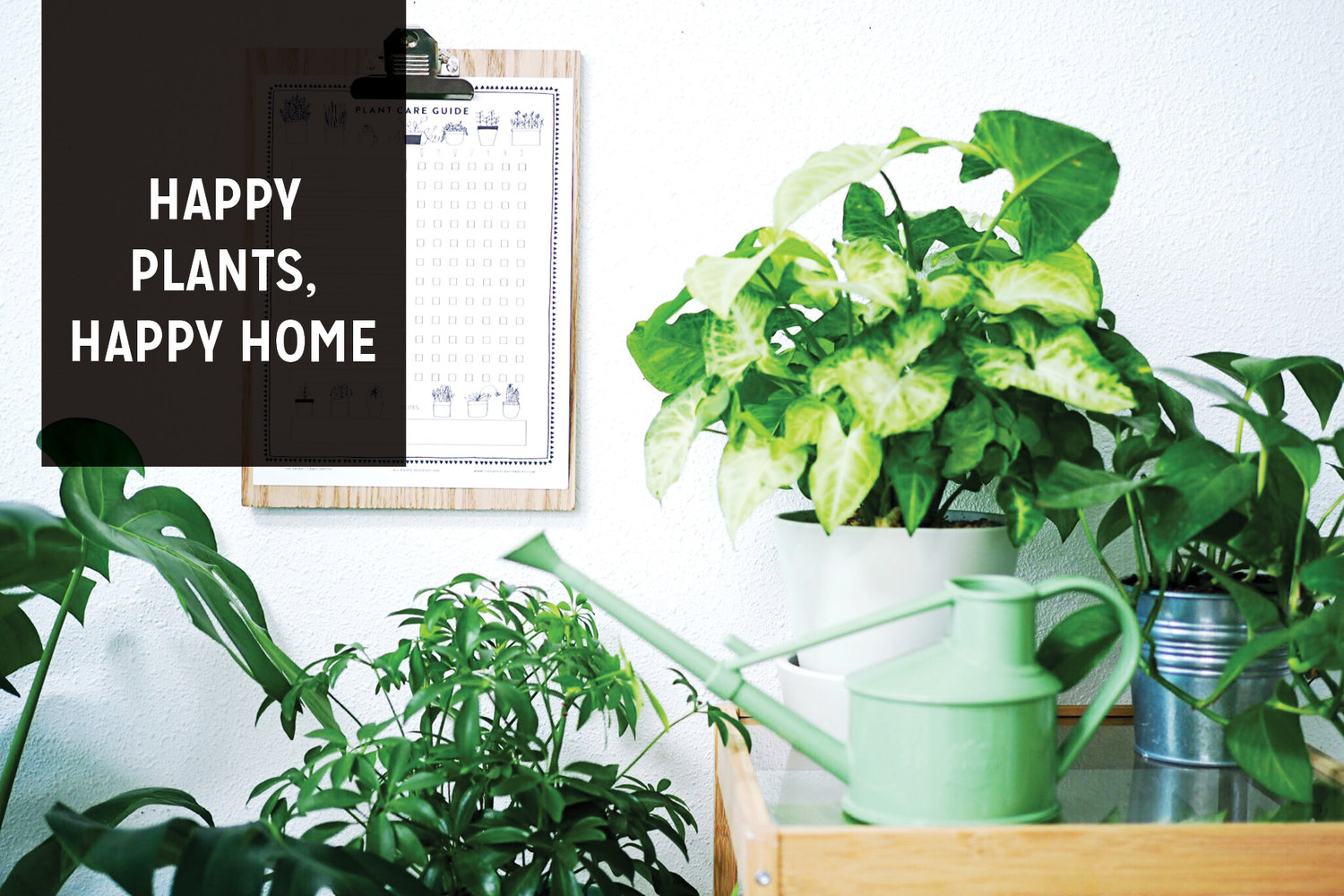 Printable: Plant Care Guide — The Paper + Craft Pantry