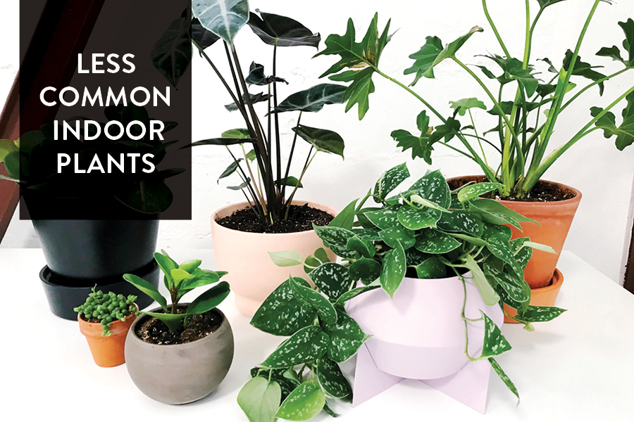 The Paper + Craft Pantry Blog: Current Best House Plants