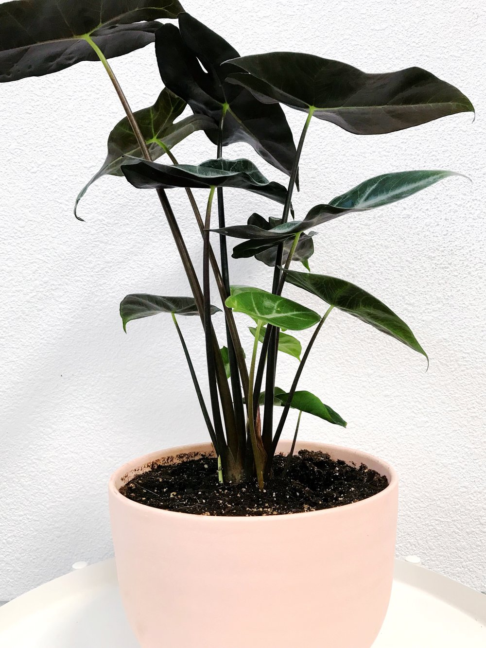 The Paper + Craft Pantry Blog Round Up: Not so basic indoor plants