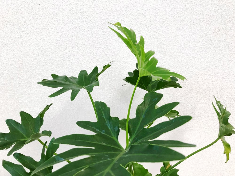 The Paper + Craft Pantry Blog Best House Plants + How to Care For Them