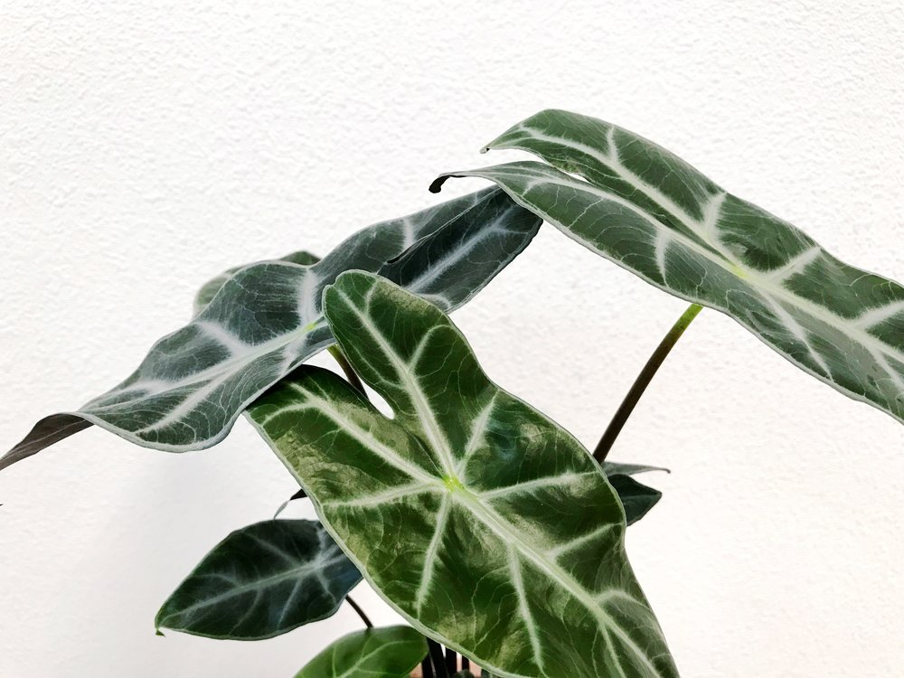The Paper + Craft Pantry Round Up of Best Unique Indoor House Plants
