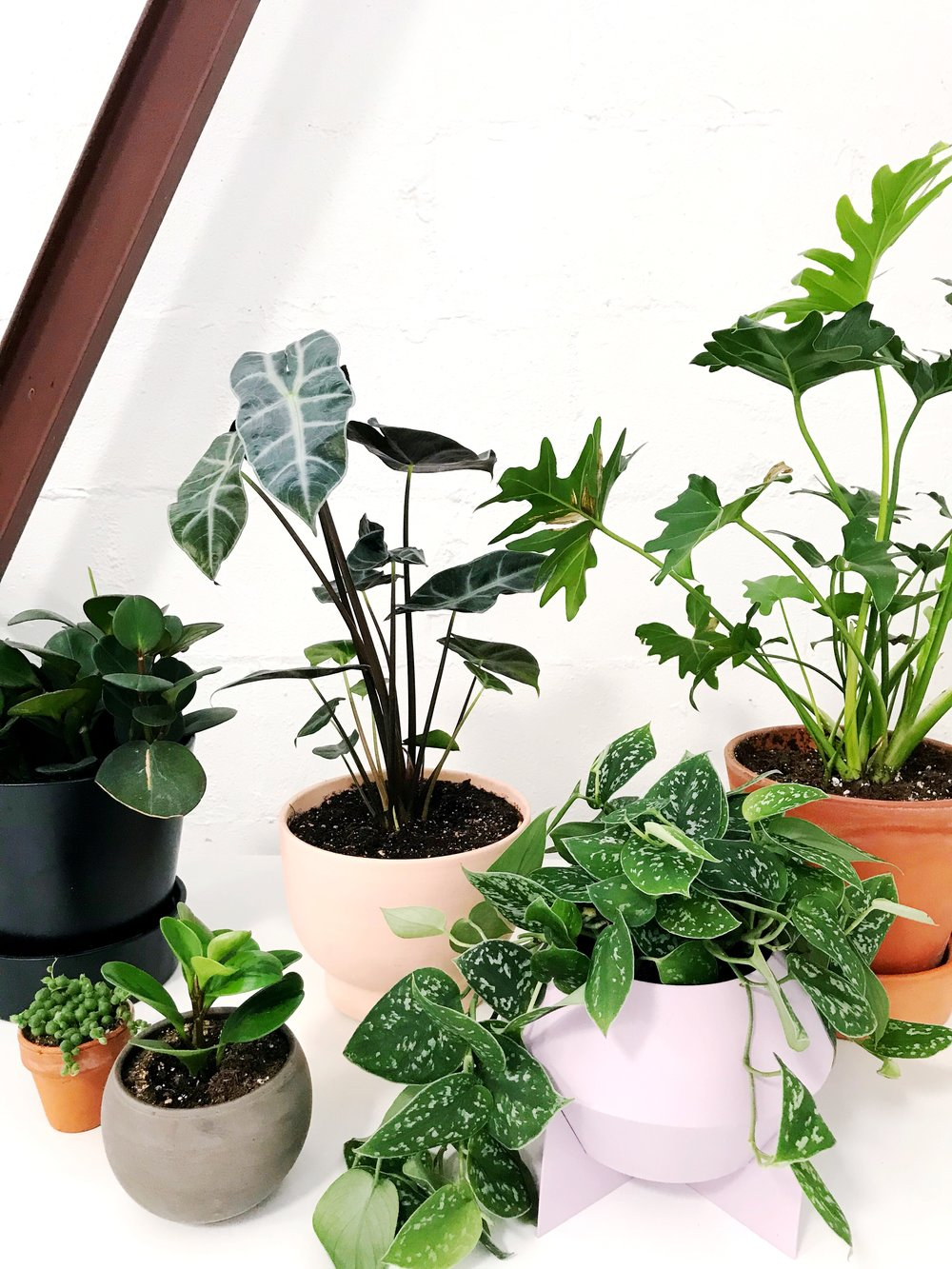 papercraftpantry-blog-roundup-best-plants-for-your-home.jpg