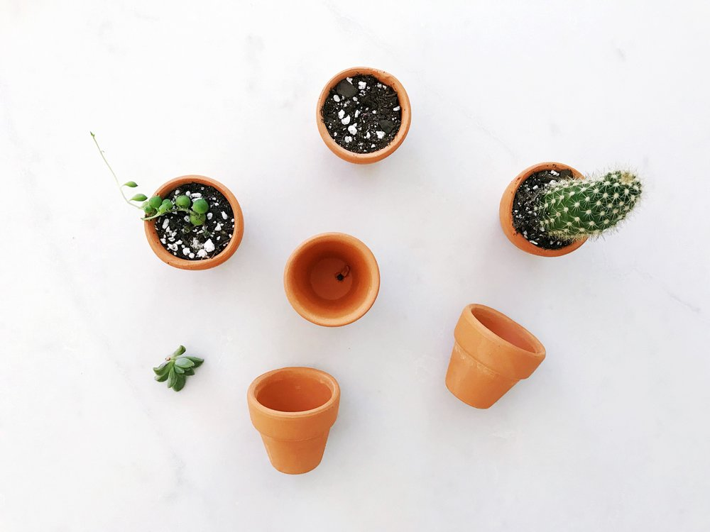 The Paper Craft Pantry: Planted Succulents and cactus.