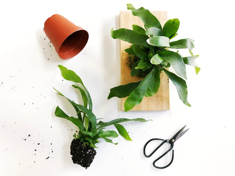 10.20.18 — Staghorn Fern Wall Art Workshop — The Paper + Craft Pantry