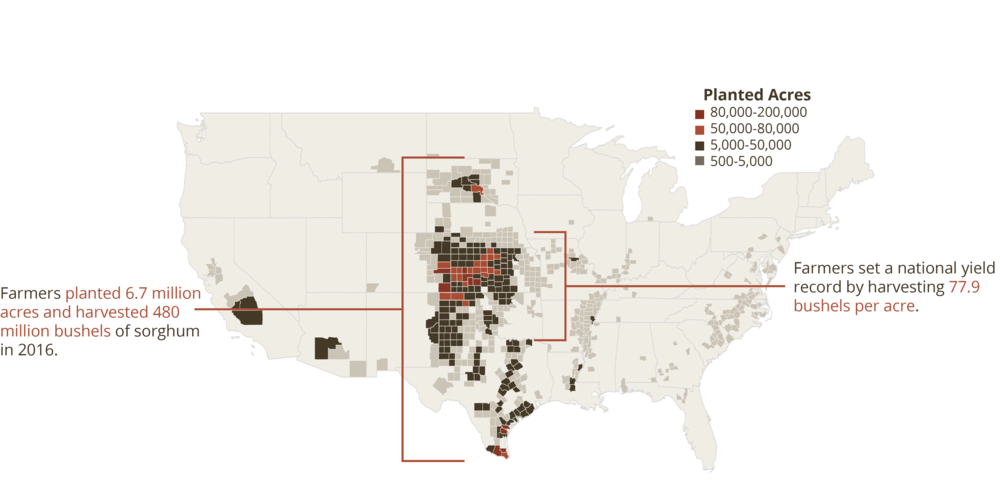 U.S. Grain Sorghum Planted Acres.PNG