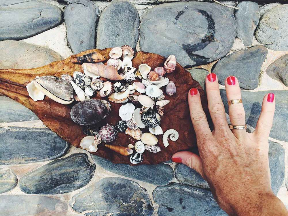 shells-in-thailand_OPT.jpg