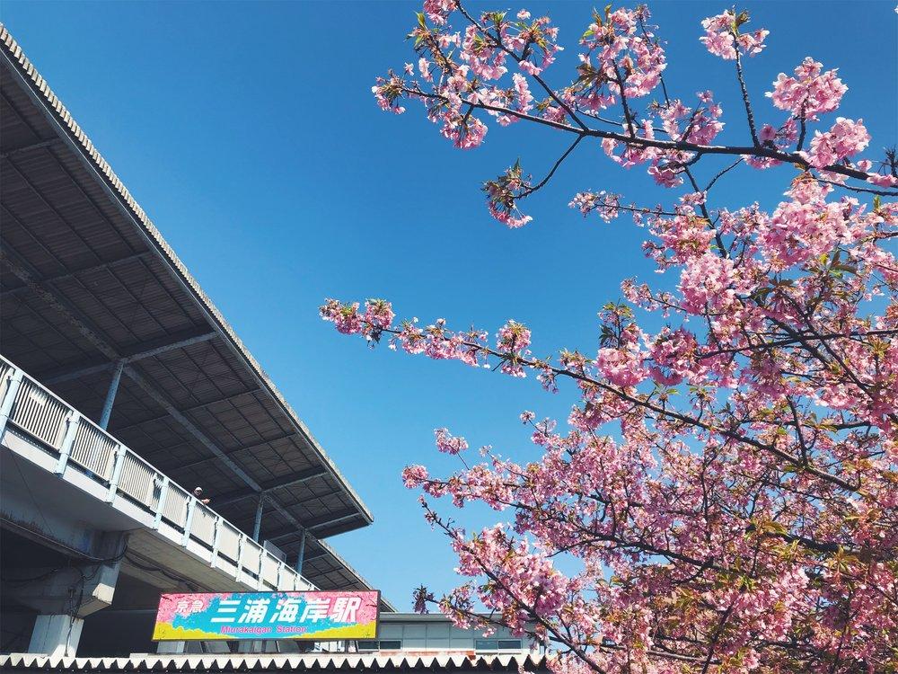 Miura | By Polygon Market