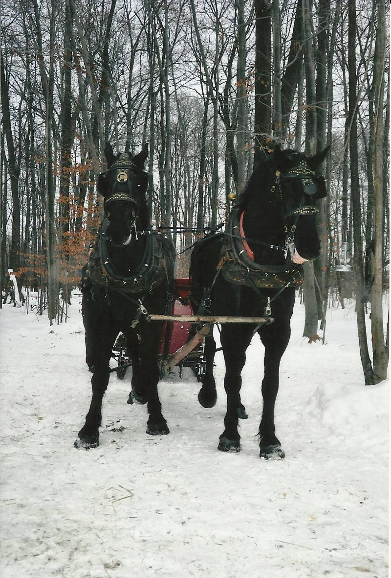 sleigh page photo seventeen.jpg
