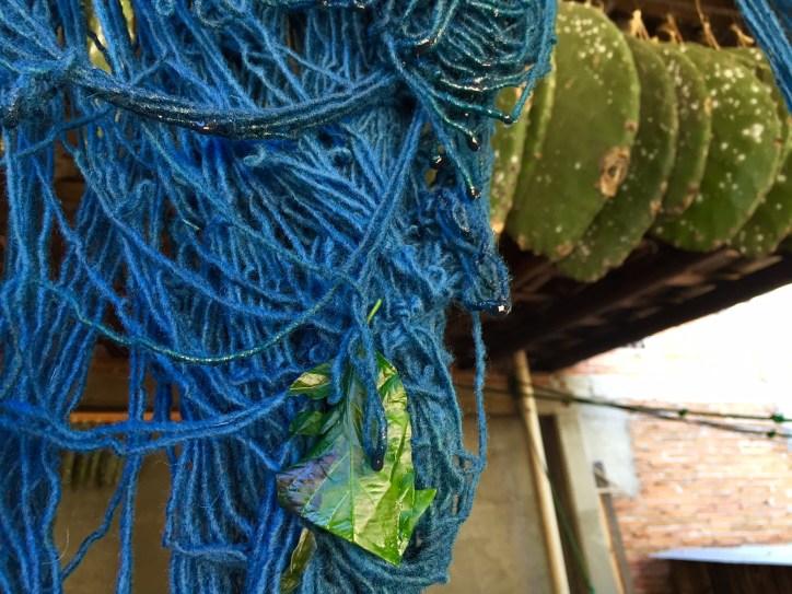 Nopal Cactus and Indigo.Photo - Oaxaca Cultural Navigator, Norma Schafer