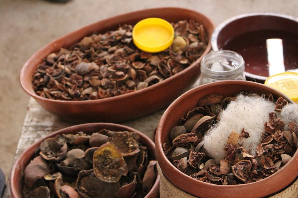Cochineal shells. Photo - KeapSake