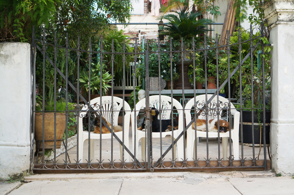 Three little snubbed nose dogs guarding the gate.  The cutest thing I've seen so far but then in the next yard I saw four starving kittens and wished so badly I had something to give them.