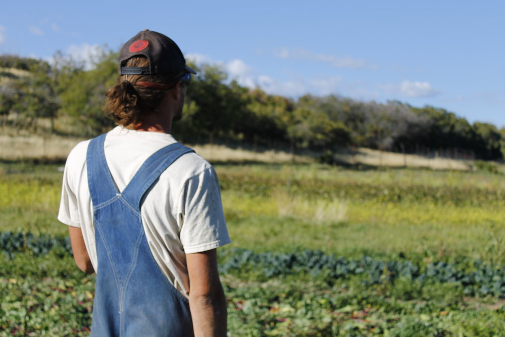 Hard Fought Success in the High Country -  Fields to Plate Produce