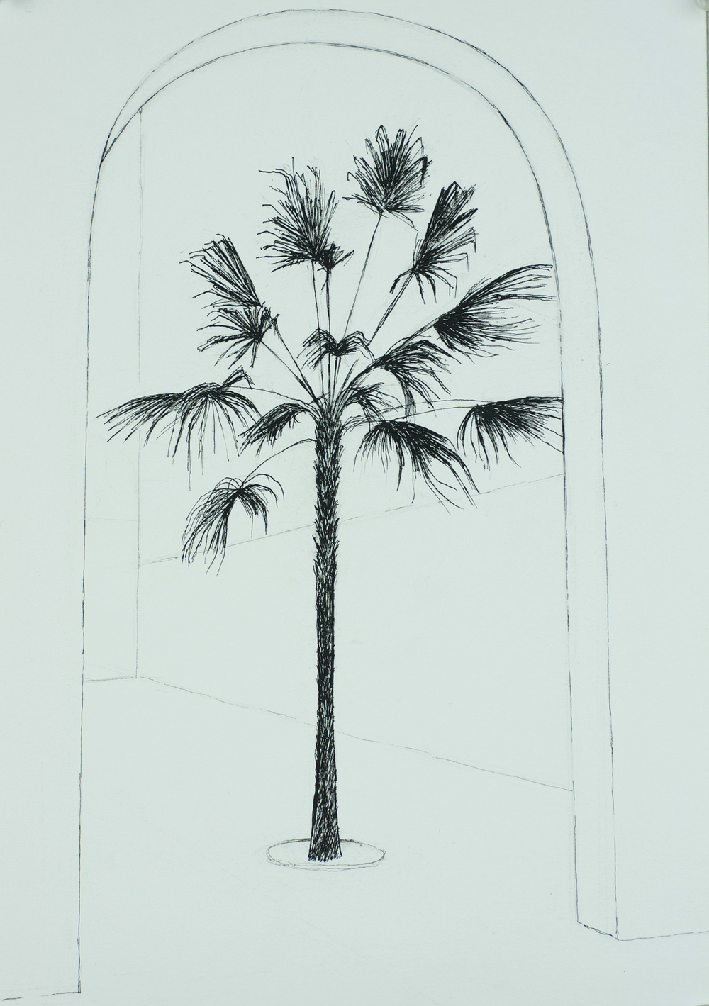 """Palm in Florence"""