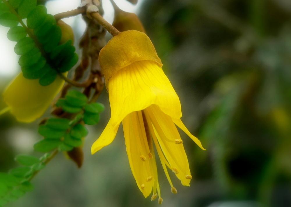 FlowerOne.JPG