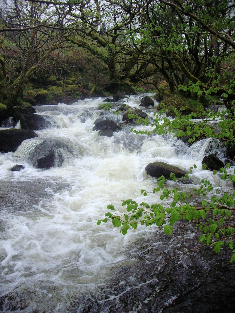 River cascading by Snowdon Lodge 005.JPG