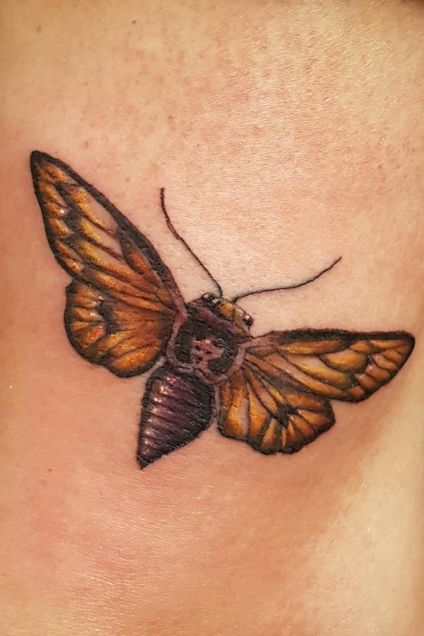 moth.jpg