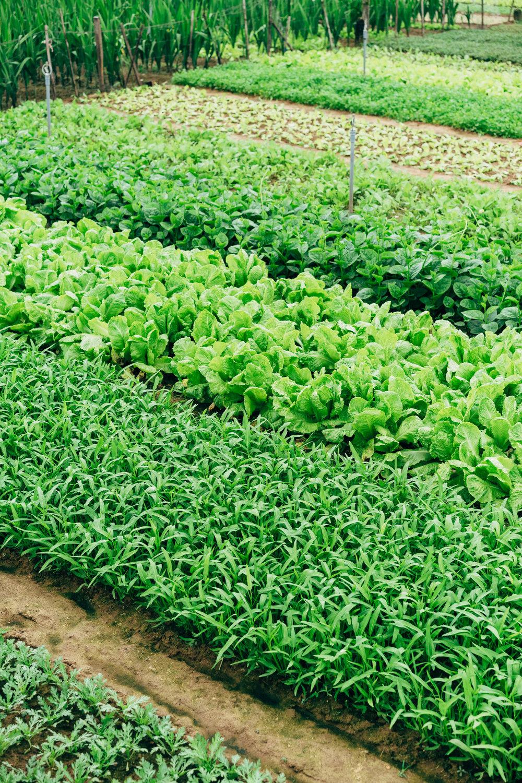 Mixed Greens<br>Vitruvian Farms - Madison, WI