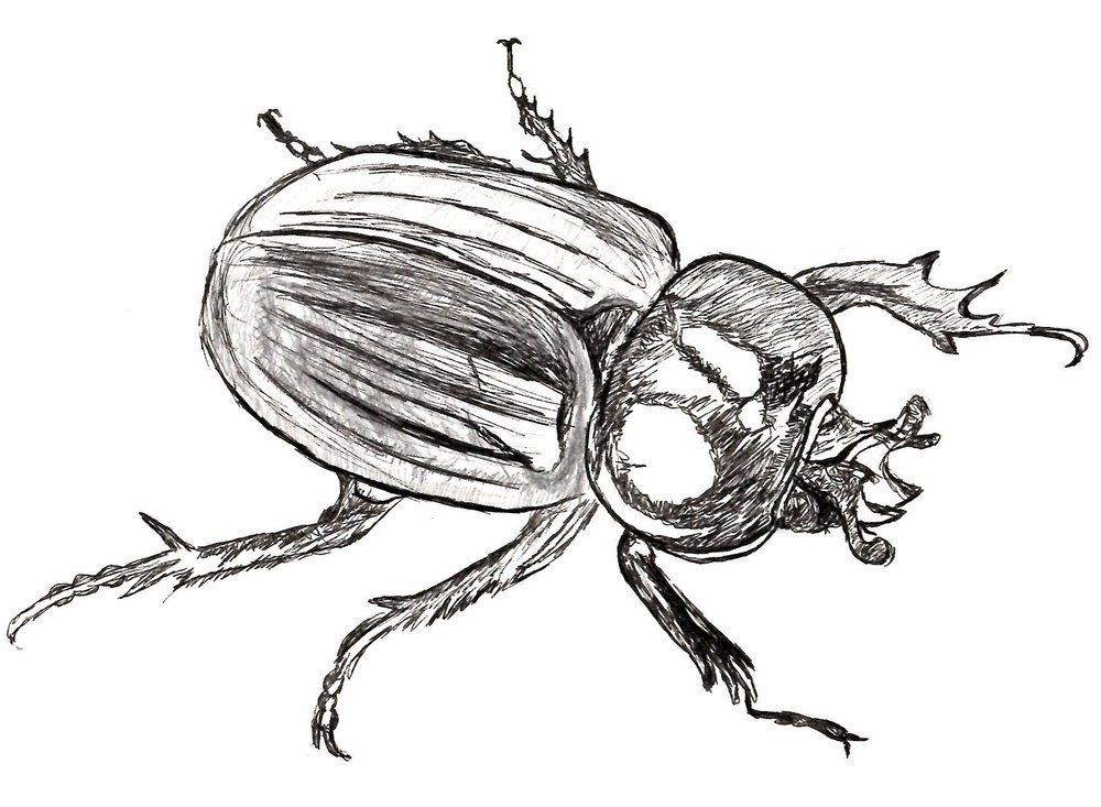 Beetle - Pen & Pencil Sketch.JPG