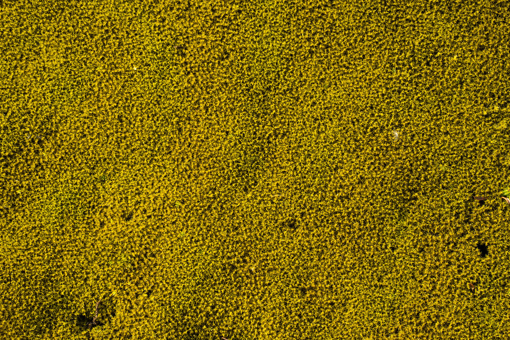 Moss at Vantajökull National Park
