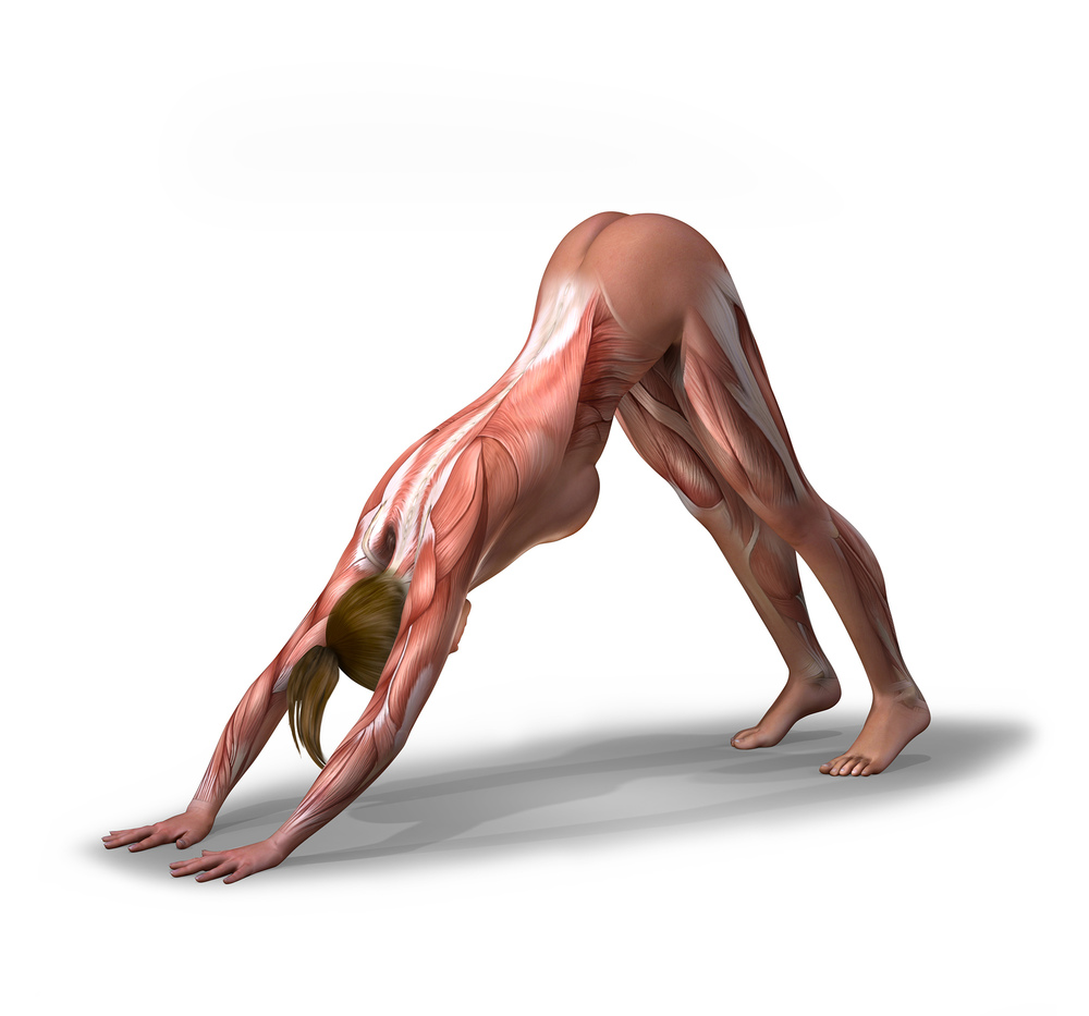 Downward Dog - Top Sante.jpg