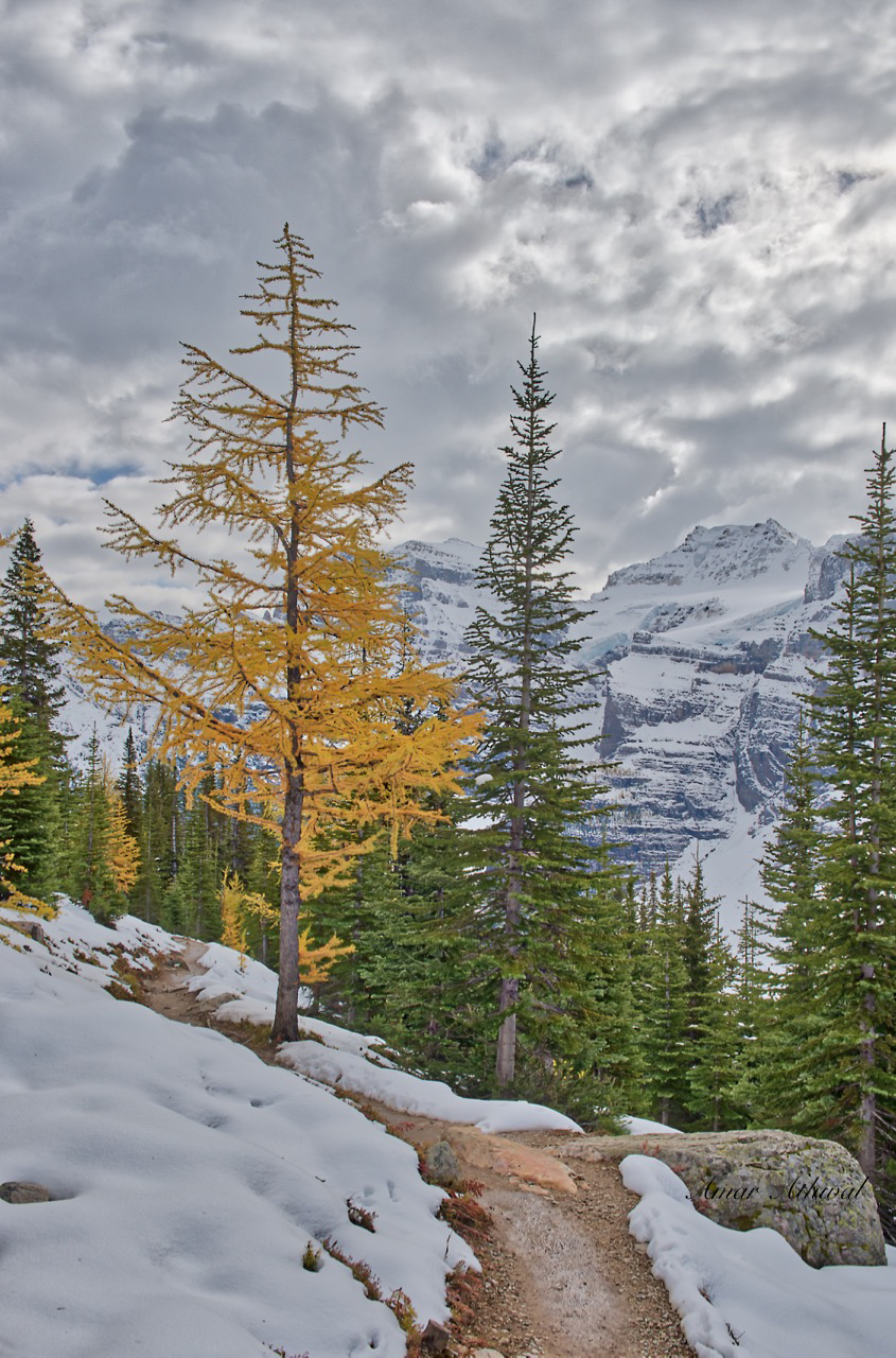 LArch Tree 180924 Amar Athwal.jpg