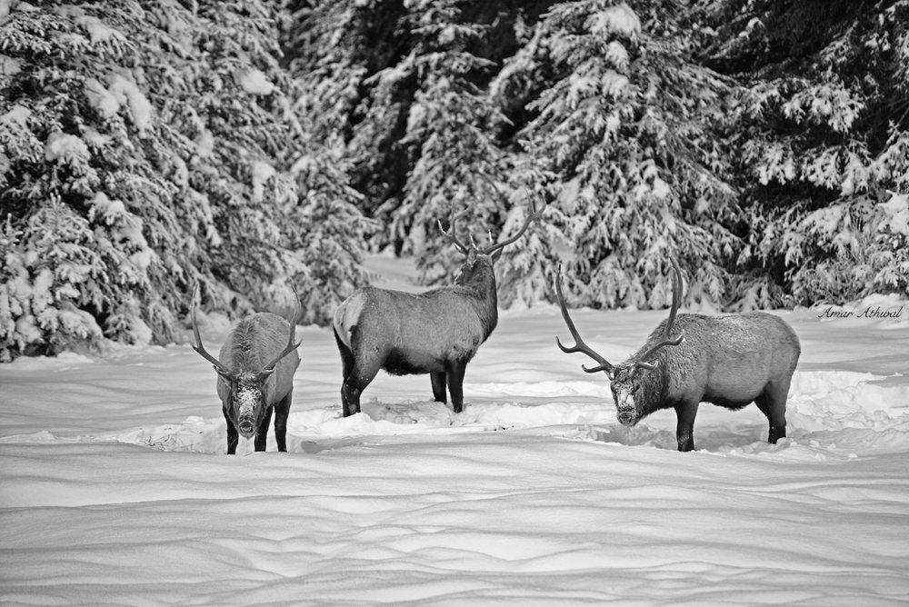 Elk 190222 Amar Athwal.jpg