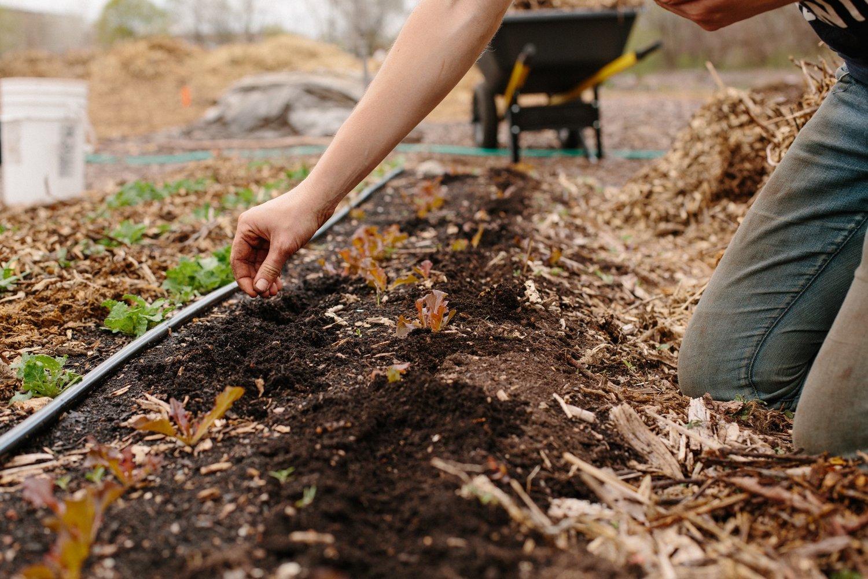 UC Farm 4 22 16 4327 The Urban Canopy