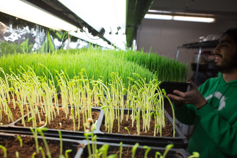 Indoor Farm.jpg