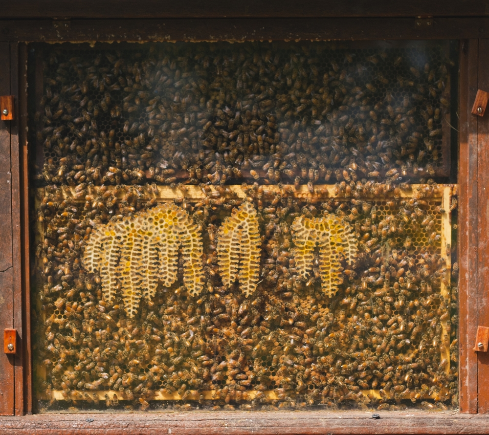 Observational Hive.jpg