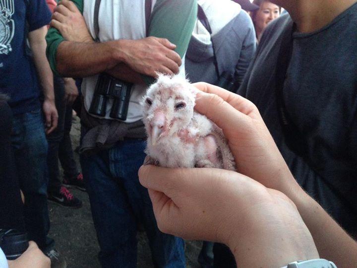 104 Owl.jpg