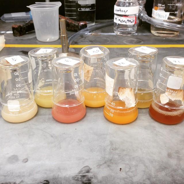 bacterialstrains.jpg