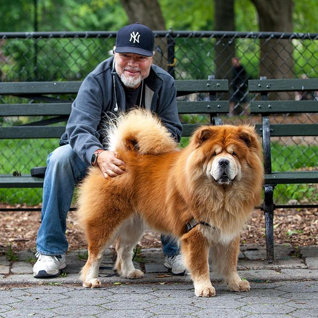 "Juan + Hemi ""He's more like a cat, very standoff-ish - typical Chow.  He thinks he's regal."" #humanandhound"