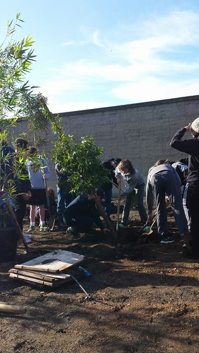 Trees being planted at an Oakland Elementary School on MLK Day of Service through CAL FIRE's Urban Forestry program