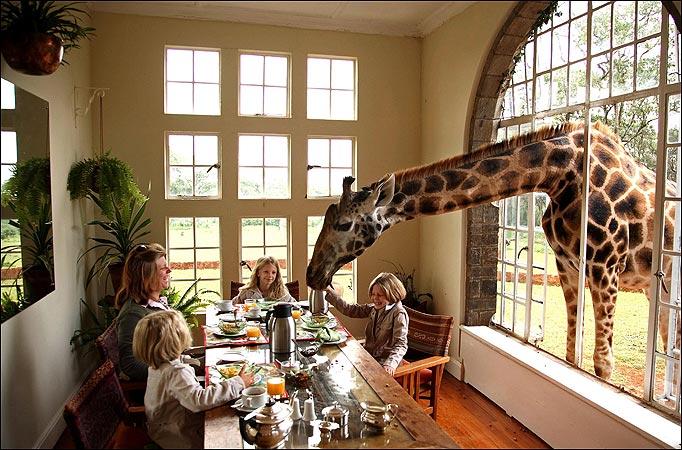 Giraffe-Manor-Nairobi-Kenya.jpg