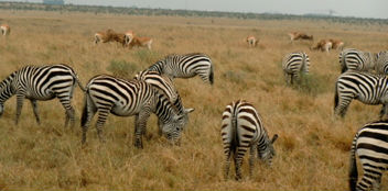 And many, many animals in a large game park on the outskirts of Nairobi.