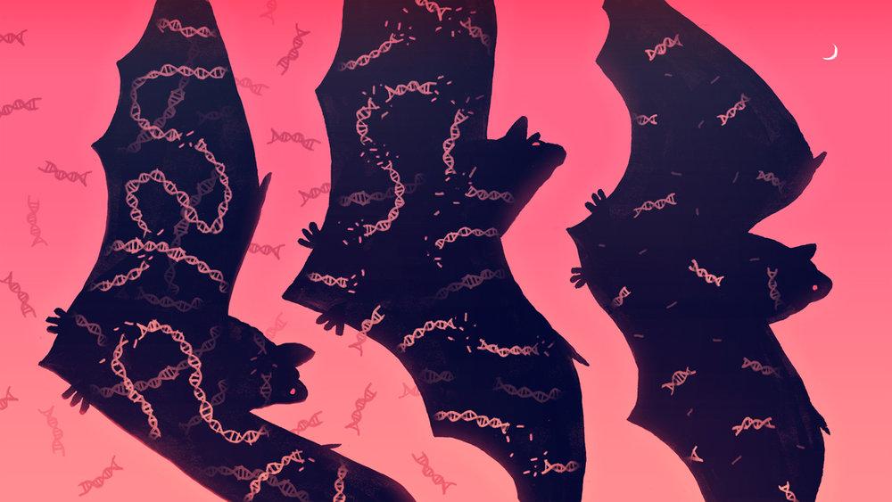 Shrinking Bat DNA and Elastic Genomes