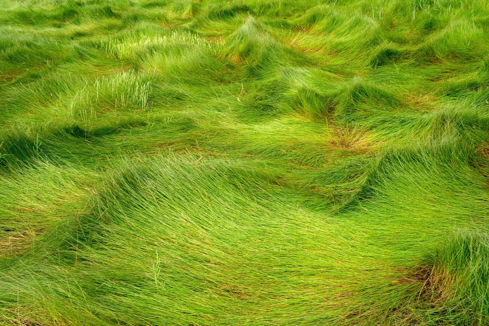 "Waves of Grass (Portfolio ""Foin de Mer"")"