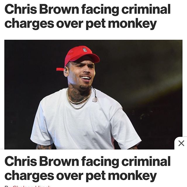 "The singer, 28, is facing a criminal case from the Los Angeles City Attorney's Office after a California Department of Fish and Wildlife investigation found that he never got a permit for his pet monkey, Fiji. ""Chris Brown posted something on Instagram in December and showed a picture of his daughter with the monkey and said it was his pet,"" an officer from the Department of Fish and Wildlife told Page Six on Friday. ""Immediately we had half a dozen or so phone calls. It is not lawful to possess an unpermitted monkey, including a bunch of other animals, in California [sic]."" ""We did a brief investigation to come to a conclusion that he was indeed in possession [of an animal without a permit],"" the officer added. ""On January 2, they used a search warrant to go to the house and [seize] the monkey as evidence and they will file the case with the L.A. City Attorney's Office. I don't think it's been filed yet. I imagine it will be filed soon."" Brown could face up to six months in jail if convicted.  He shares his daughter, Royalty, 3, with Nia Guzman.  Brown's attorney told says they are ""confident nothing will come of this."" Source: Page Six #ChrisBrown #Monkey #Criminal #legal #news #entertainment #music #law"