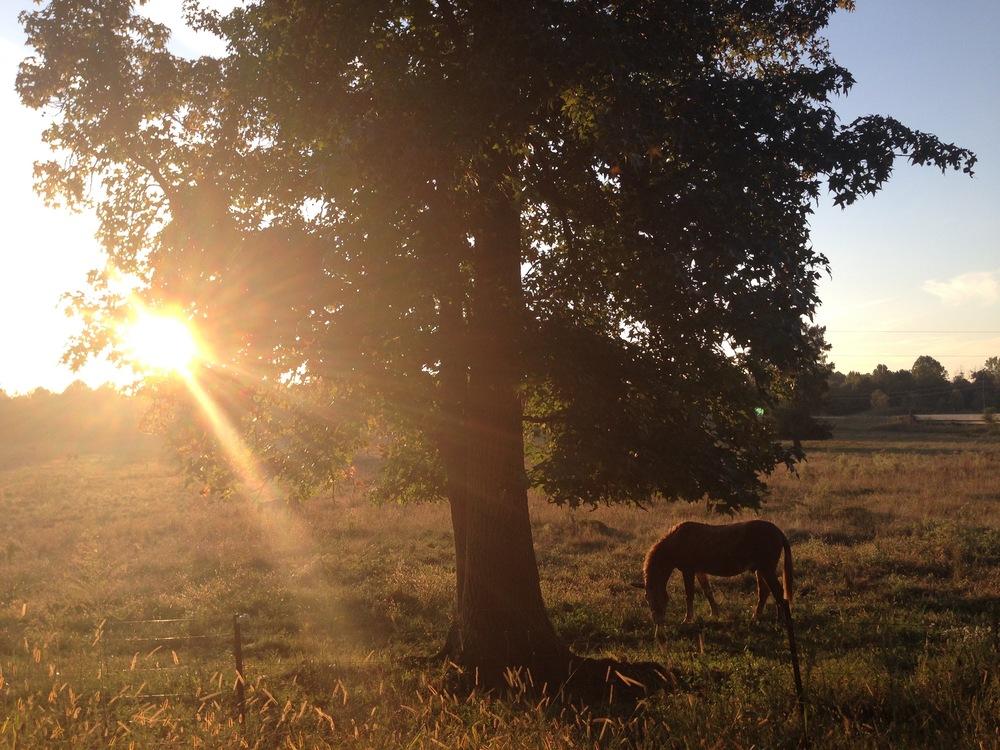 horse and sun.jpg