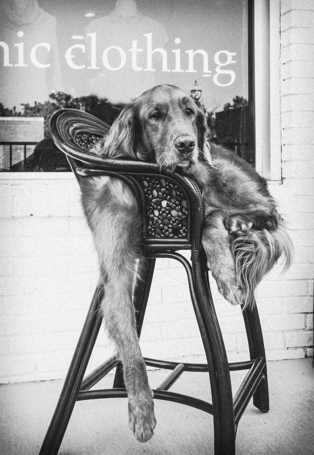 Shop Dog