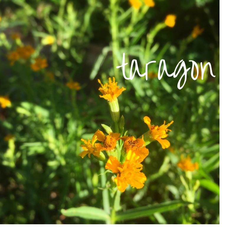 marigold-5.png