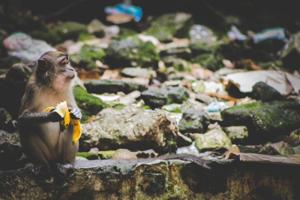 Batu Caves | Picture People Travel (10 of 19).jpg