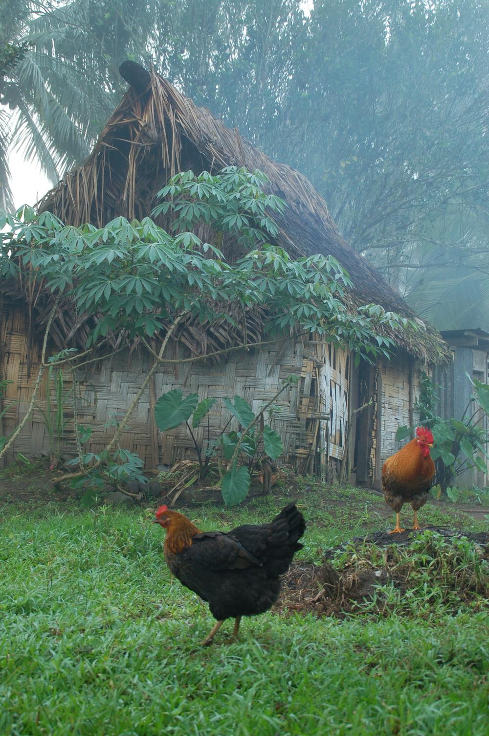 Misty Morning in Fiji
