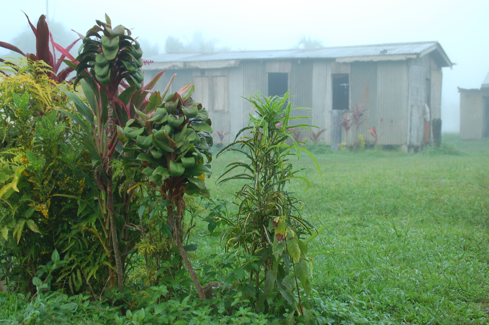 Misty Morning Village