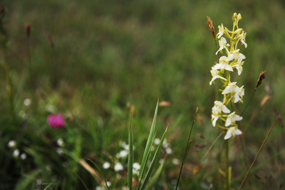 Wildflowers on Öja island