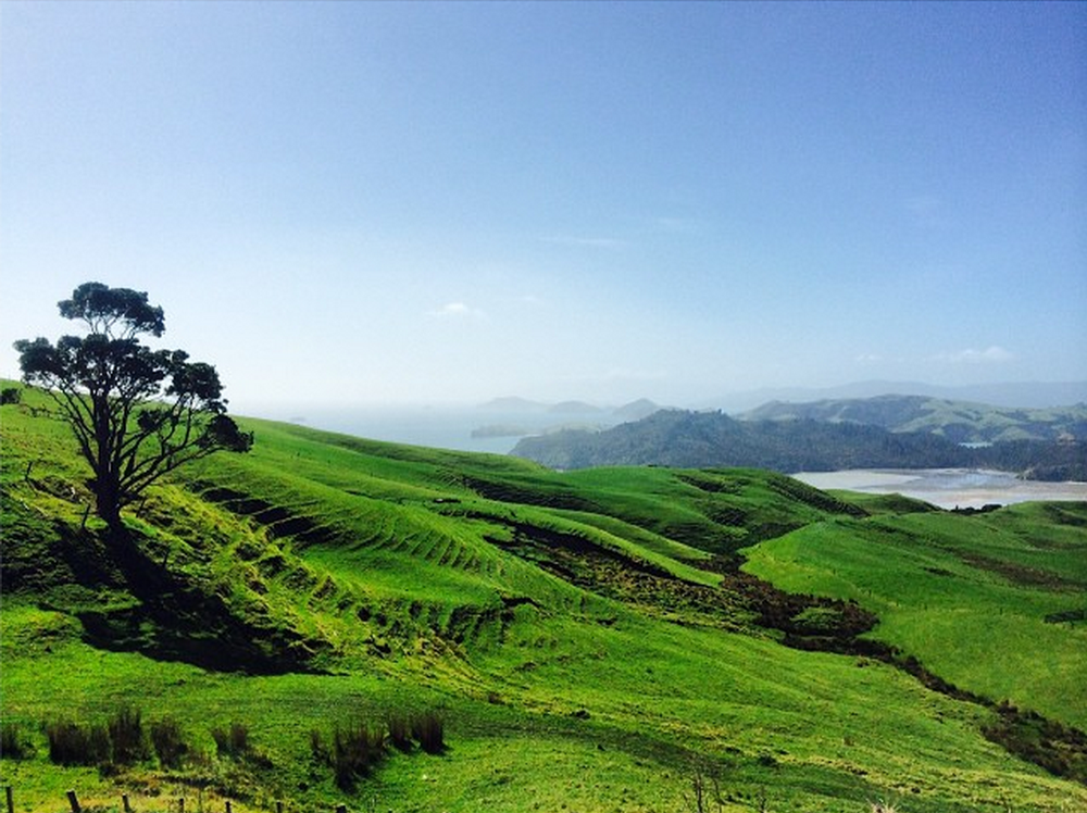 Green and blue beautiful landscape of New Zealand and Coromandel