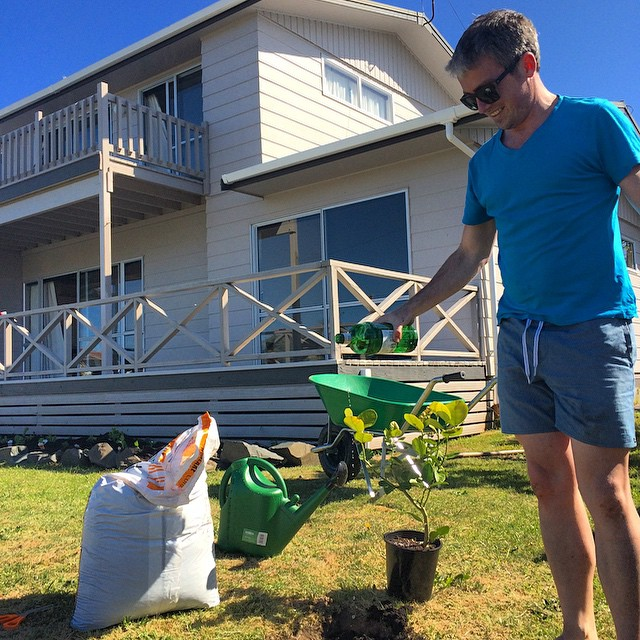 Andrew McLean planting his lemon tree with gin, Whangamata, New Zealand