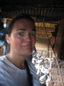 In a chicken coop