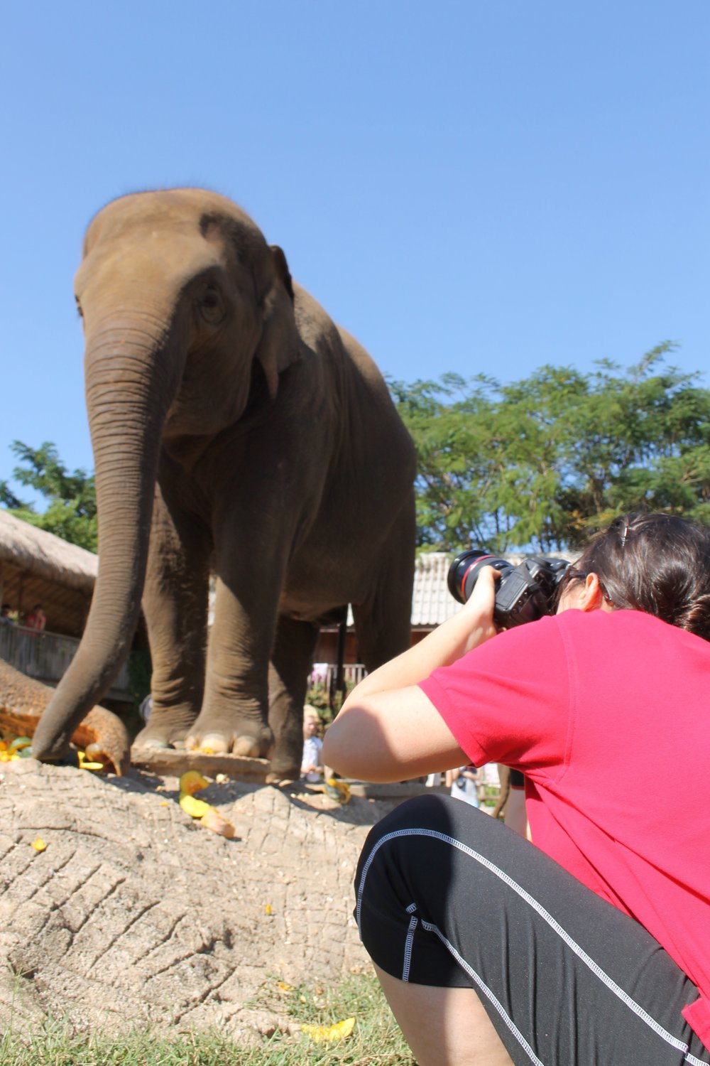 At the Elephant Nature Park in Chiang Mai, Thailand