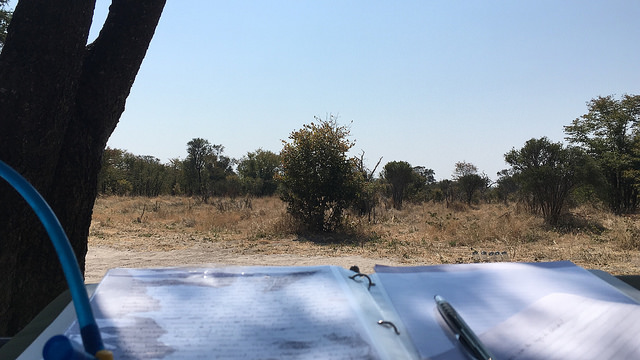 Staying hydrated and shaded while writing by hand in the Greater Okavango Delta